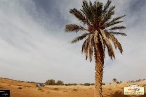 Рали Мароко 2012: снимки и видео от първите три етапа